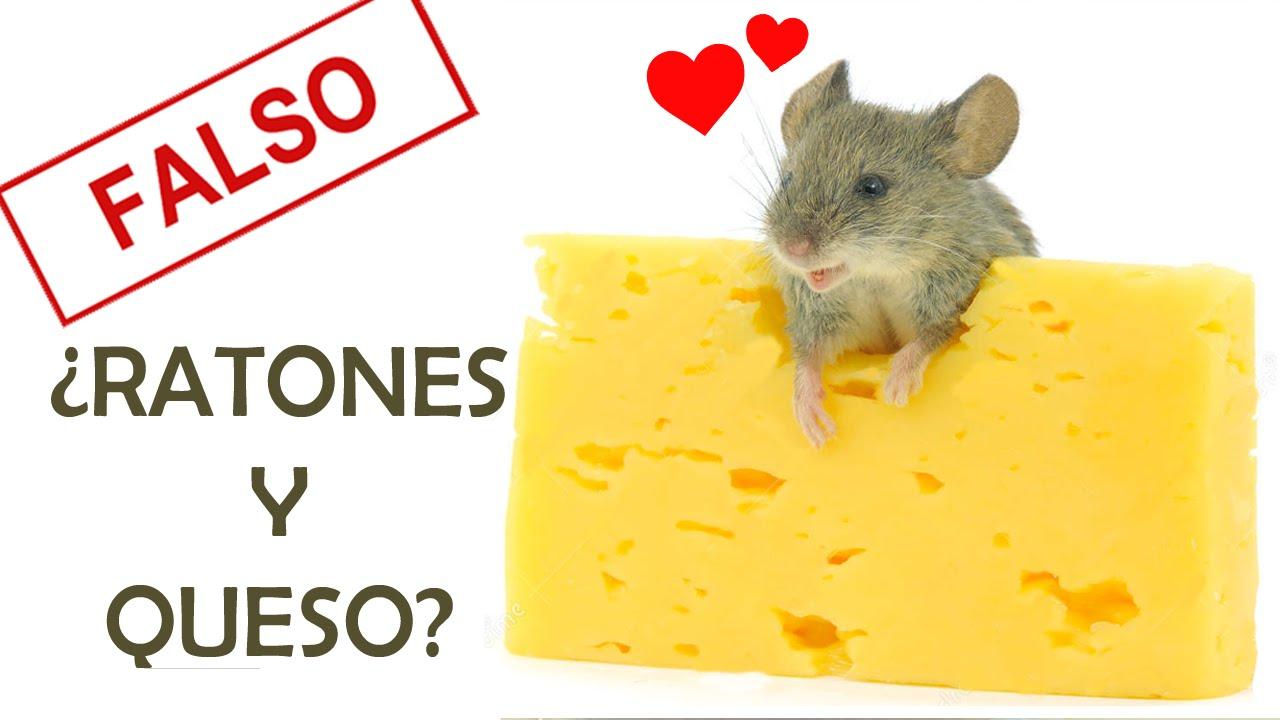 ¿LOS RATONES AMAN EL QUESO? | MITOS ZOOLÓGICOS
