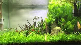 High tech planted aquarium | discuss aquarium | sunsun ADS 500