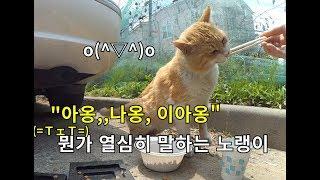 맡겨둔 밥 달라고 칭얼대는 길고양이(ღ˘⌣˘ღ).