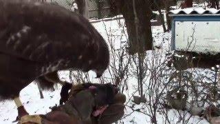 Пасеку охраняют хищные птицы