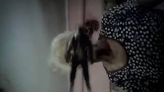 Мои домашние ужасы!!😂