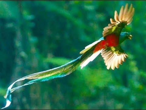 El Quetzal Ave Nacional de Guatemala