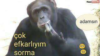 Komik Hayvanlar - Funny Animals