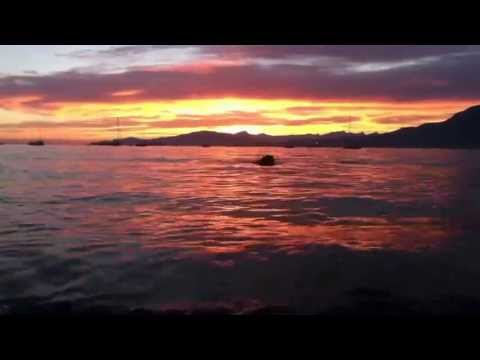 Kits Point Dog Beach (Hadden Park), Vancouver BC - Sunset Swim