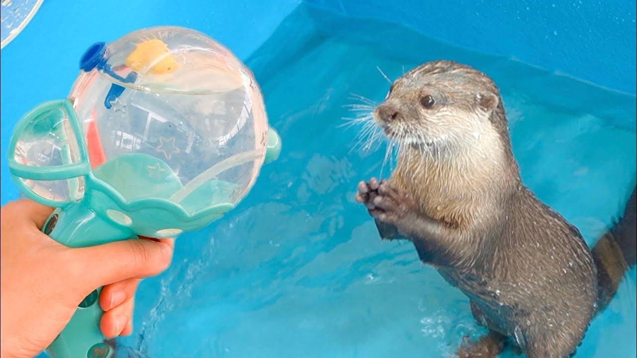 【カワウソ】水鉄砲に大はしゃぎ!カワウソたちのリアクション|The otters are having a blast! Otter's funny reactions
