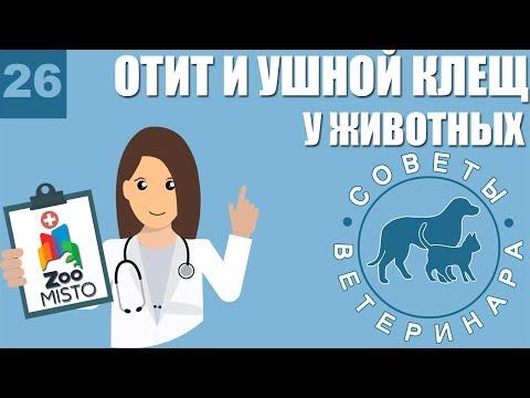 Отит и ушной клещ у домашних животных | Что такое отит | Симптомы ушного клеща | Советы ветеринара