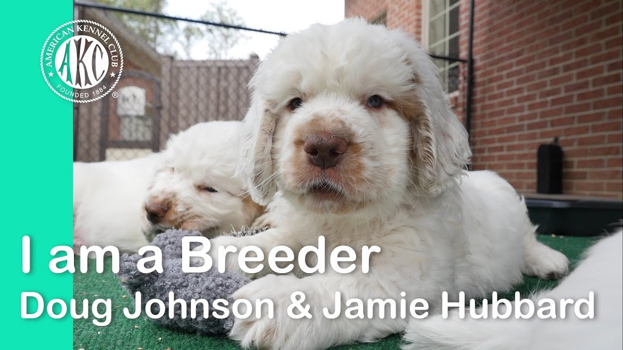 I am a Breeder- Doug Johnson & Jamie Hubbard - Clussexx Kennels