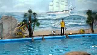 Минский дельфинарий часть 3(Это видео загружено с телефона Android., 2014-02-11T17:12:40.000Z)