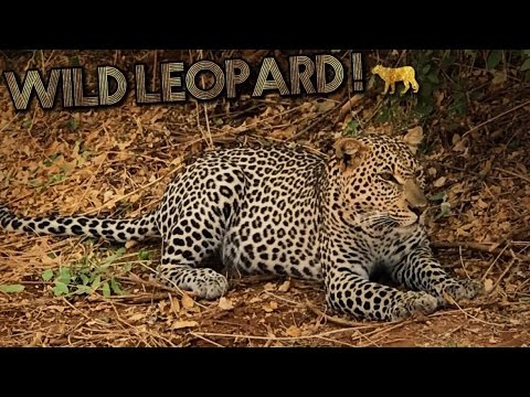 SPOTTED THE LEOPARD! 🐆  Samburu Park Game Safari // Kenya Trip Africa Travel Vlog #7 -
