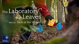 The Laboratory With Leaves (Part 12):  Tech in the Woods thumbnail