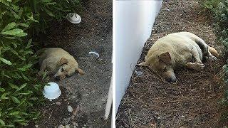 Hund im Dreck gefunden, nachdem die Familie weggezogen ist und ihn zurückgelassen hat!