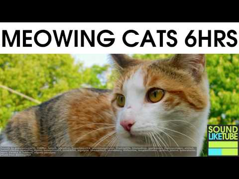 CAT SOUNDS for 6 Hours