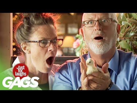 Man Spits Out Live Baby Chick! - Just For Laughs Gags