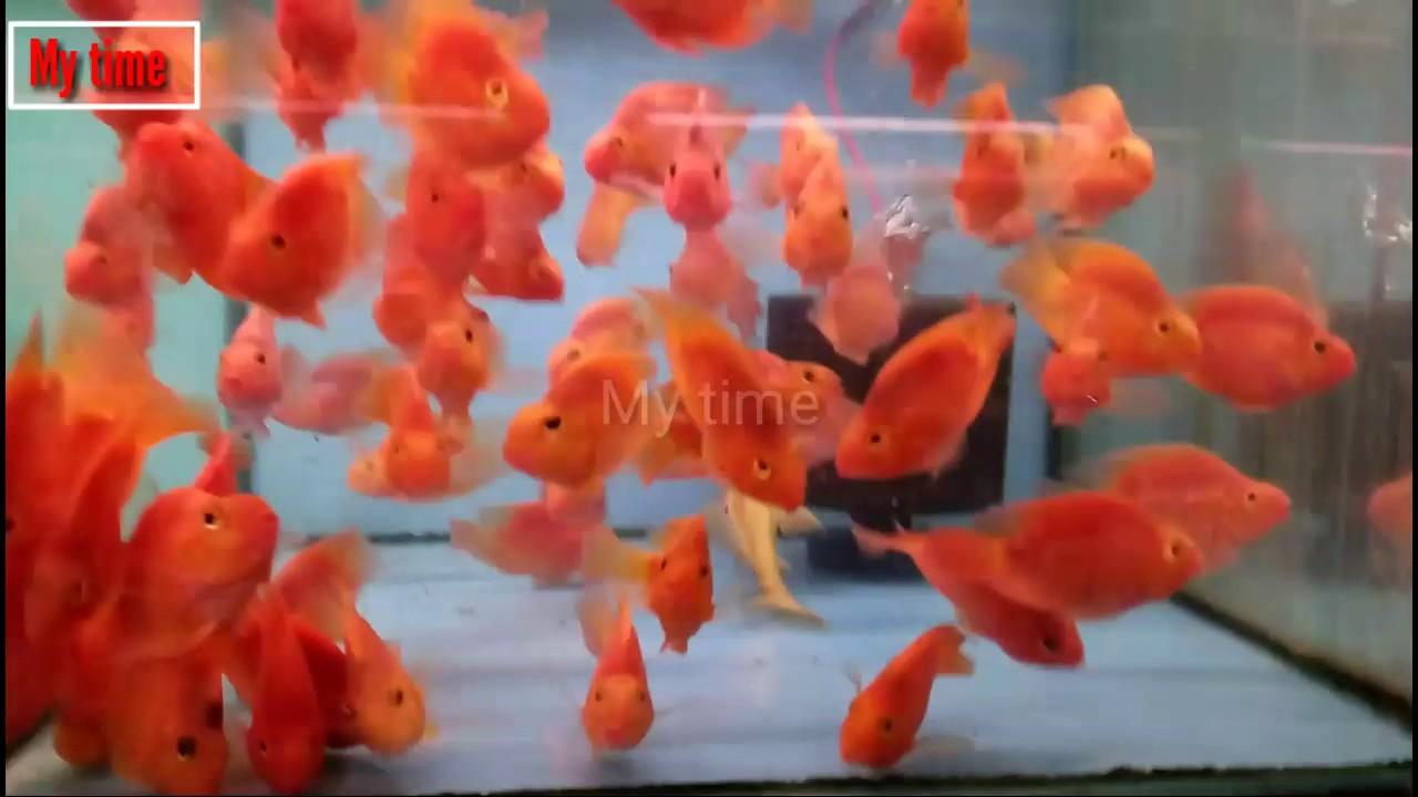 Kurla Fish Market Youtube