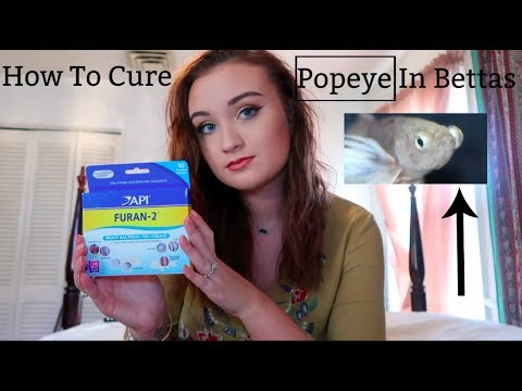 HOW TO CURE POPEYE IN BETTA FISH!! | ItsAnnaLouise