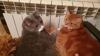 кот и кошка греются возле батареи, но остаться должен один
