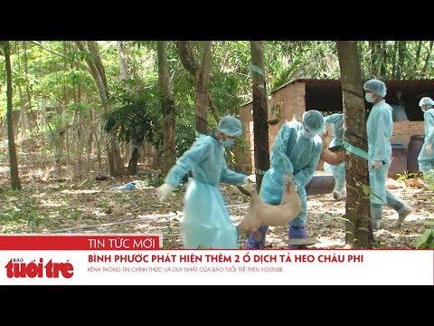 Bình Phước phát hiện thêm 2 ổ dịch tả heo châu phi trên địa bàn thị xã Phước Long và huyện Phú Riềng