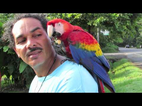 Scarlet Macaw bicycle bird man of Jaco Cost Rica
