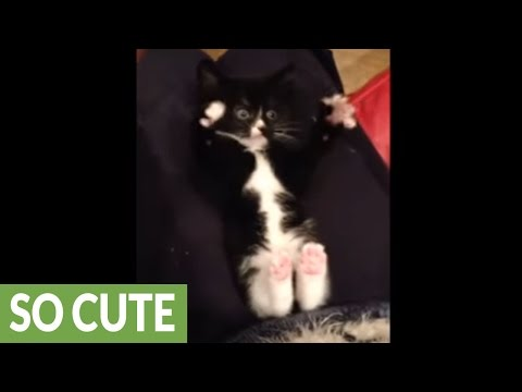 Rescue kitten being tickled is an extreme cuteness overload!