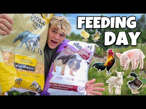 FEEDING ALL My FARM ANIMALS!!!