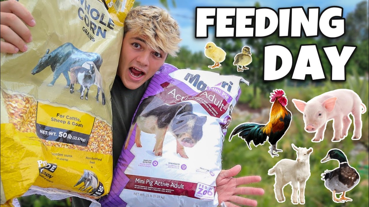 FEEDING ALL My FARM ANIMALS!!!