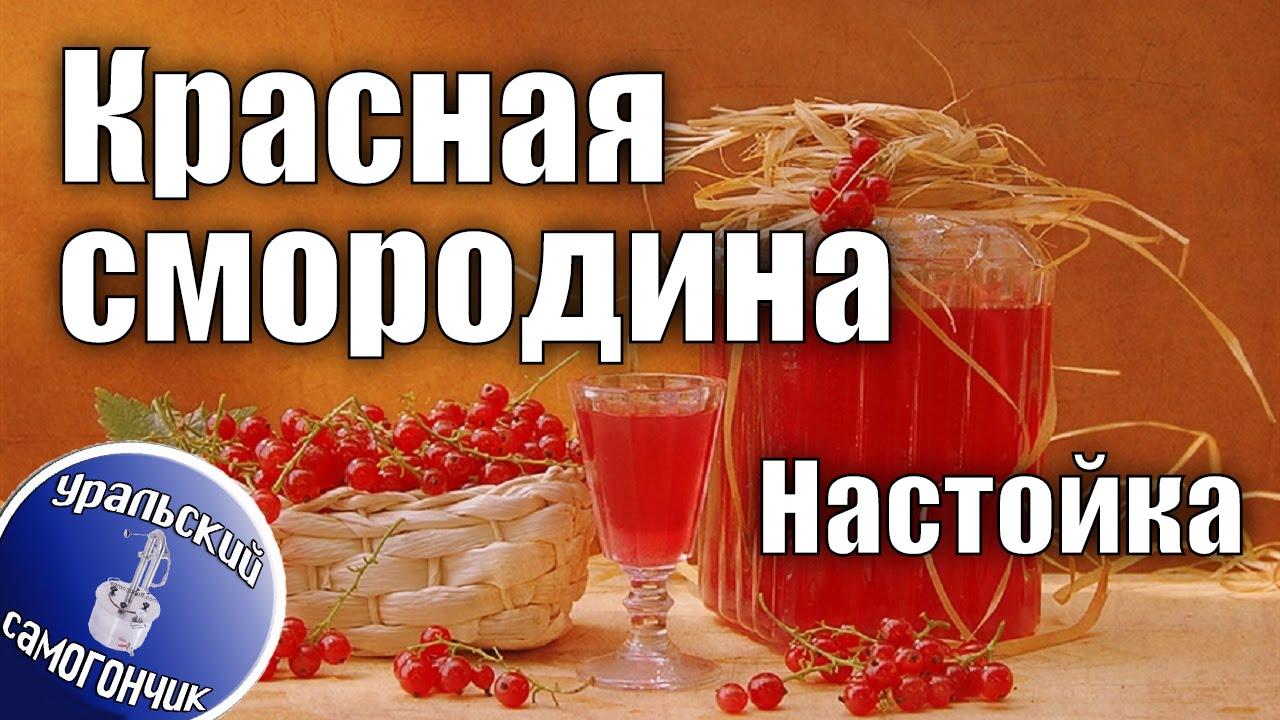 Настойка Красная смородина - Вкусные рецепты для теплой компании.