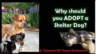 Why Should You Adopt A Shelter Dog?¿por Qué Debo Adoptar Un Perro Del Refugio? Subtítulos En Español