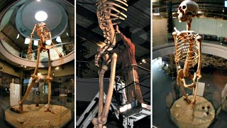 Ecuador Giants Shown To The World Tales From Out There