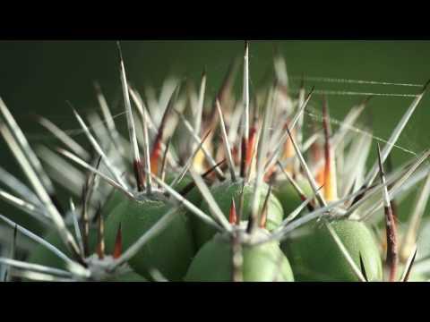 Arikok National Park flora and fauna (Music: Datap...