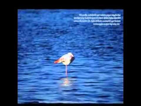 Maher zain - never forget.flv