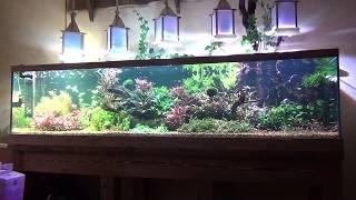 Запуск и обслуживание аквариума травника.