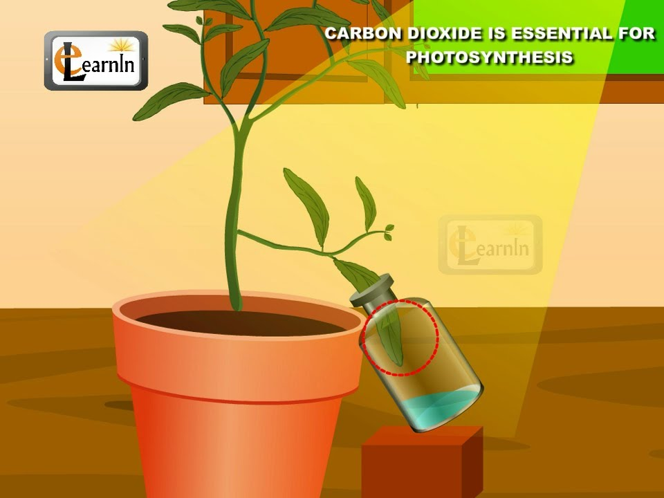Experiment to show the importance of carbon dioxide for photosynthesis law research papers