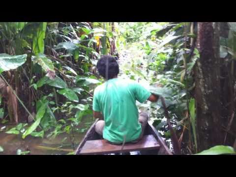 Going By Canoe Inside Of Jungle (rain Forest) In Peruvian Amazon River Near Paucarina Lodge