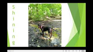 Manchester terrier Rada from Bratislava. 'So beautiful and wild'. FOOD