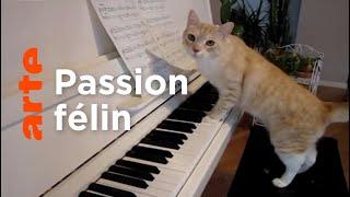 Pourquoi un artiste ne jure que par son chat ? | Gymnastique, la culture en s'amusant | ARTE