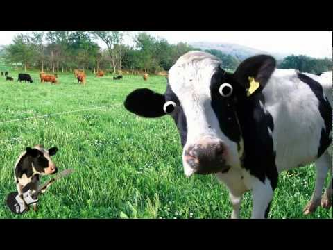 Thumbnail: I'm a Cow Song