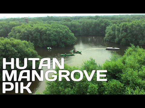 hutan-mangrove-di-pantai-indah-kapuk-jakarta-utara