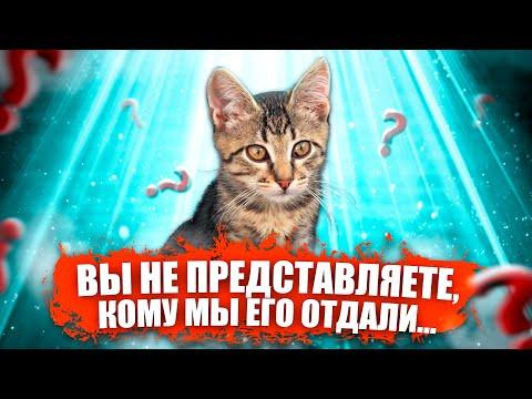 Вы не представляете, кому мы отдали этого котенка / SANI vlog