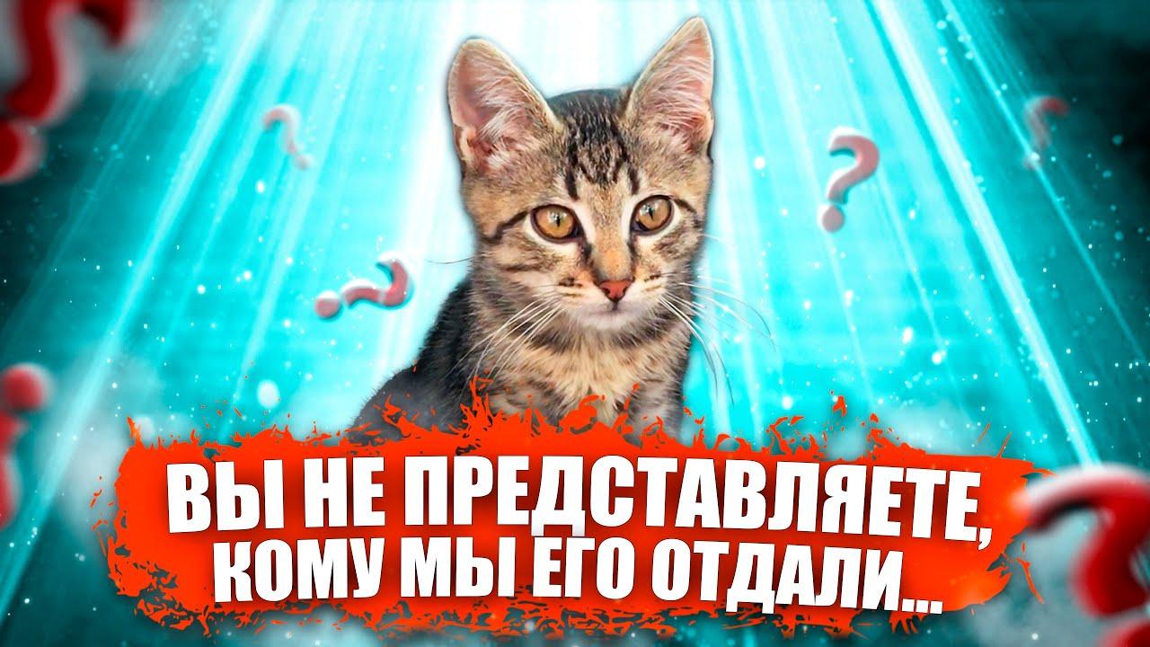 Вы не представляете, кому мы отдали этого котенка / SANI vlog - скачать с YouTube бесплатно
