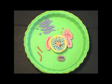 Animal Cell Project Youtube