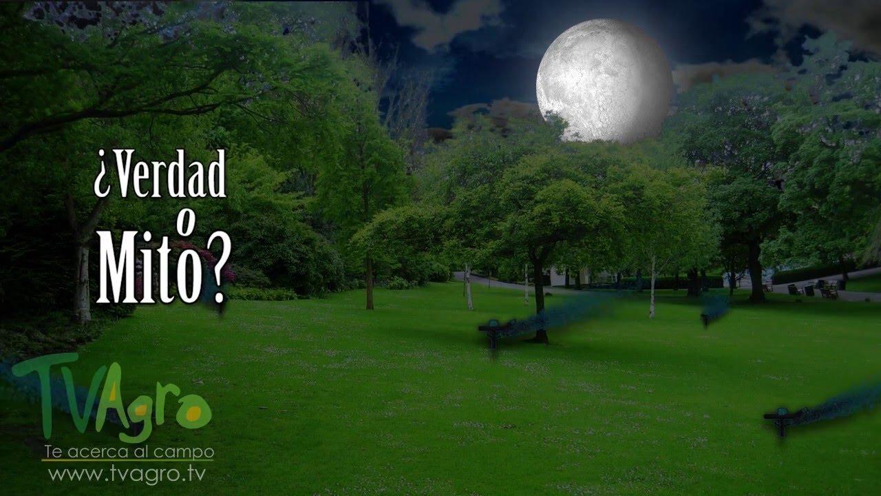 En qué momento se debe regar el césped? - TvAgro por Juan Gonzalo ...