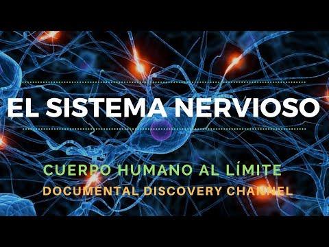 el-sistema-nervioso-/-discovery-channel-/-cuerpo-humano-al-límite-completo