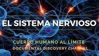 Imagenes humano nervios cuerpo