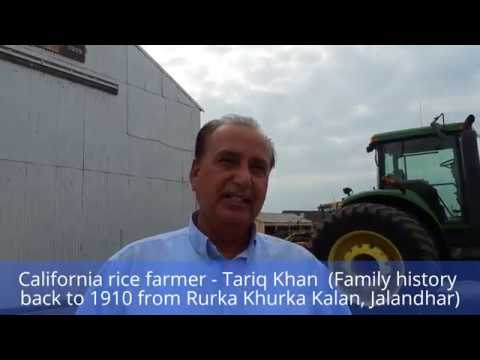 Punjabi rice farmer in California | Tariq Khan - Butte City | Nov 11, 2016