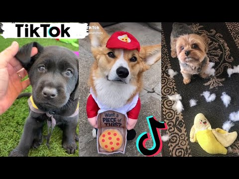 TikToks That Make You Go AAWWW ~ Funny Dogs of TIK TOK ~ Try Not to Laugh