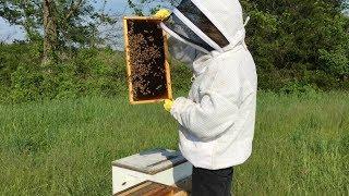 2 bee or not 2 bee. Забацали свою пасеку в Америке!