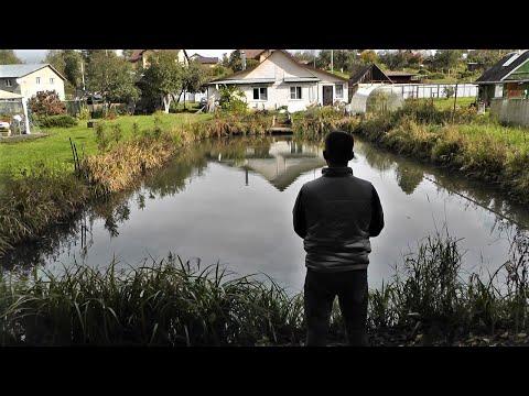 Щука в моём пруду живёт два три года и потом ловлю