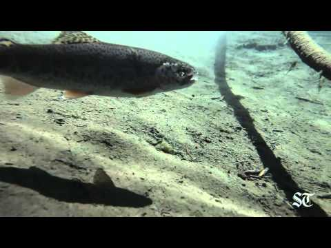 Seattle Times Video: Elwha Special Report outtakes