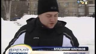 ТК Донбасс - Городской вид транспорта - ездовые собаки!