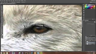 Wolf Banner Speed Art